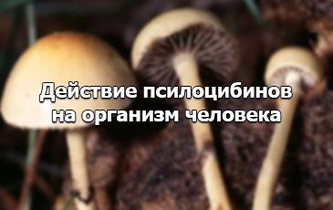Действие галлюциногенных грибов на организм человека
